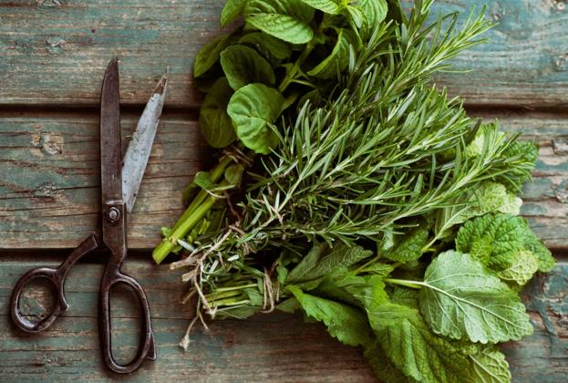 how-to-harvest-dry-herbs.jpg