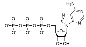 ATP_chemical_structure.png