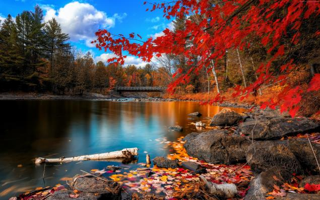 autumn-forest-3840x2400-leaves-trees-lake-rocks-beach-bridge-sky-578.jpg