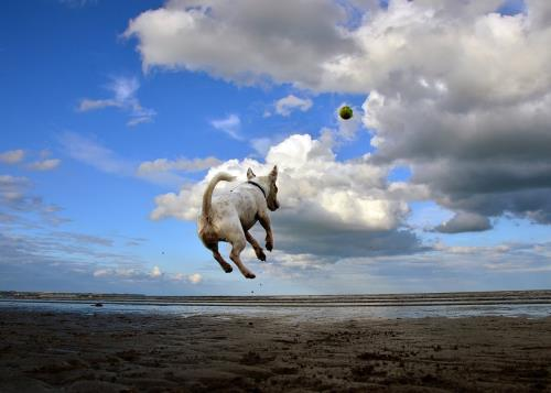1280px-Jack_Russell_Terrier_flying_after_a_ball.jpg
