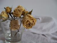 dying_flowers____by_ladybutterly83.jpg